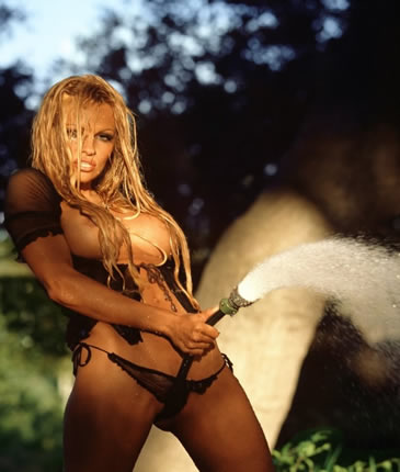 pamela anderson blonde nude model